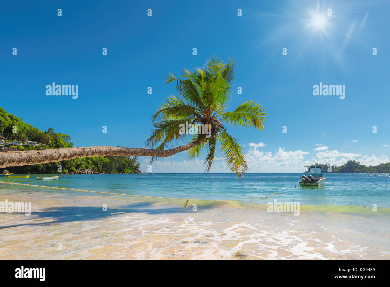 Palm tree over beautiful beach on tropical island - Stock Image