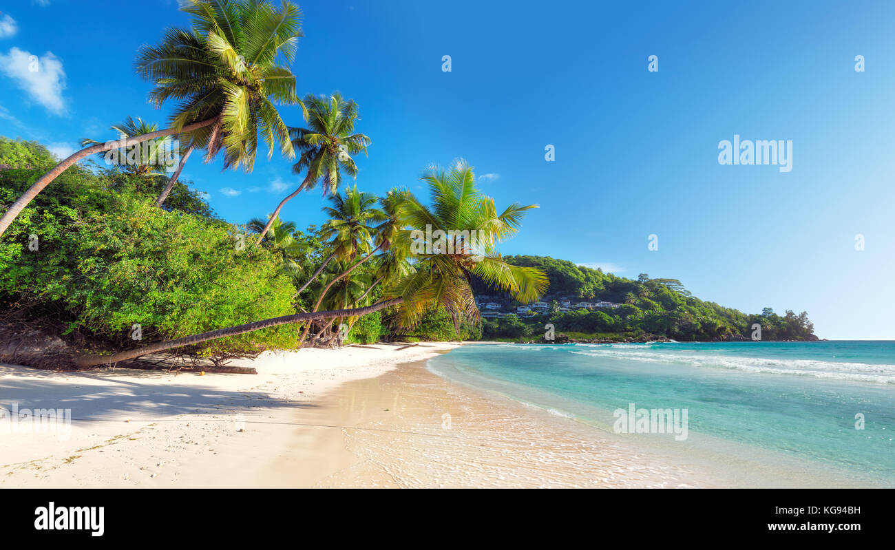 Beautiful coconut palm on tropical beach Stock Photo