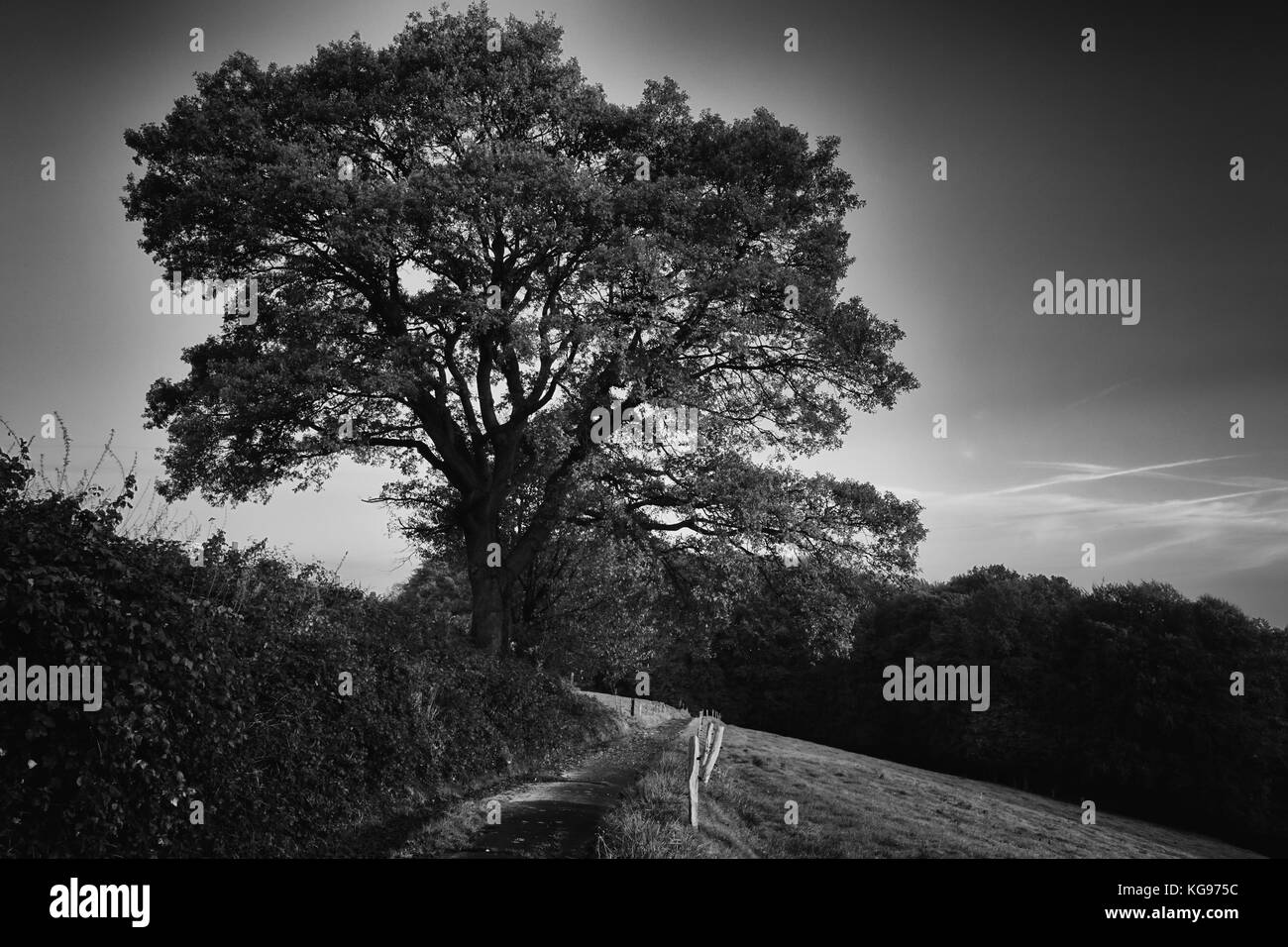 Tree and way in the dark - Stock Image