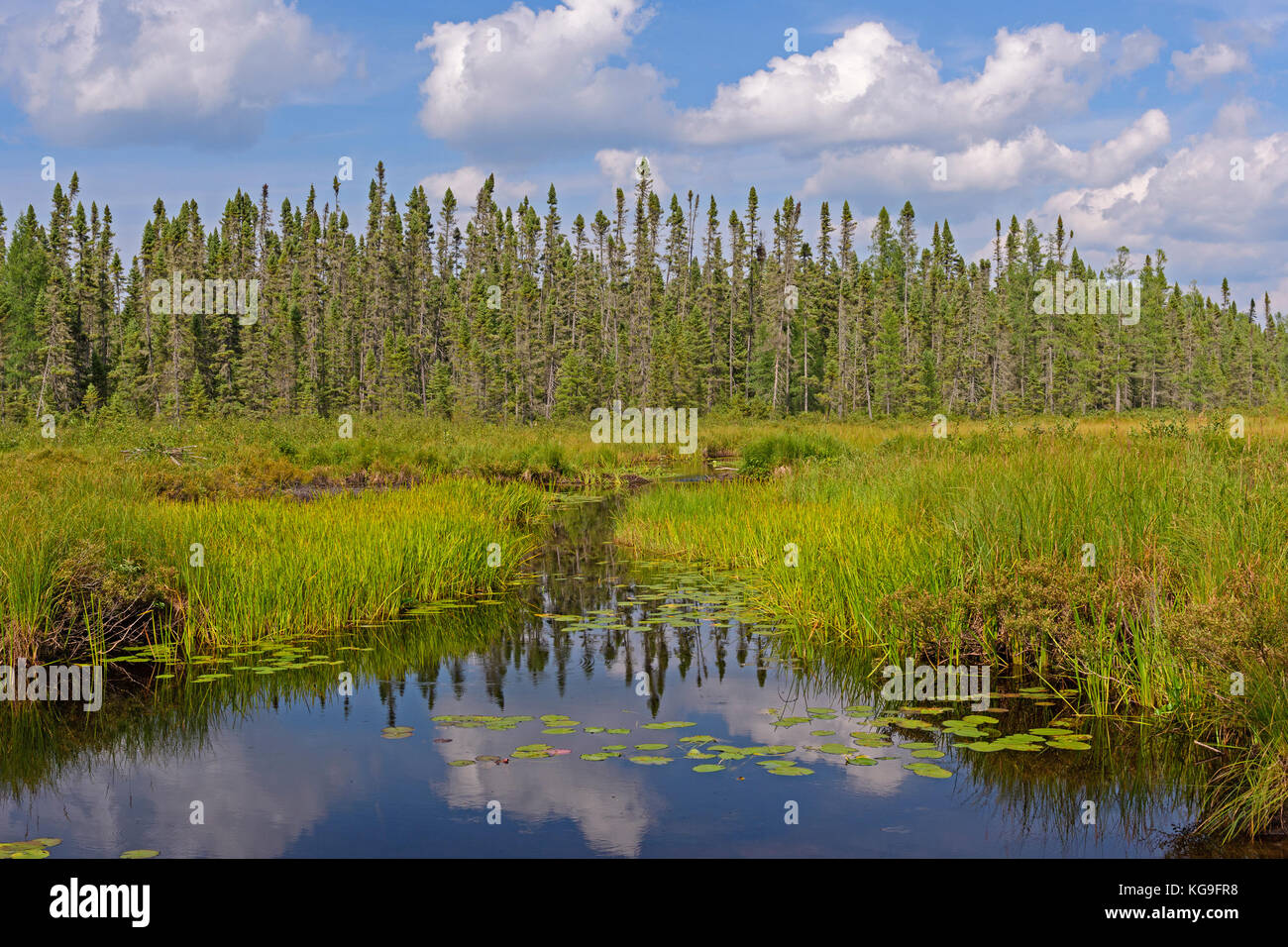 Canoe Path Through the Wetlands on Cross Bay Lake in the Boundary Waters Canoe Area in Minnesota - Stock Image