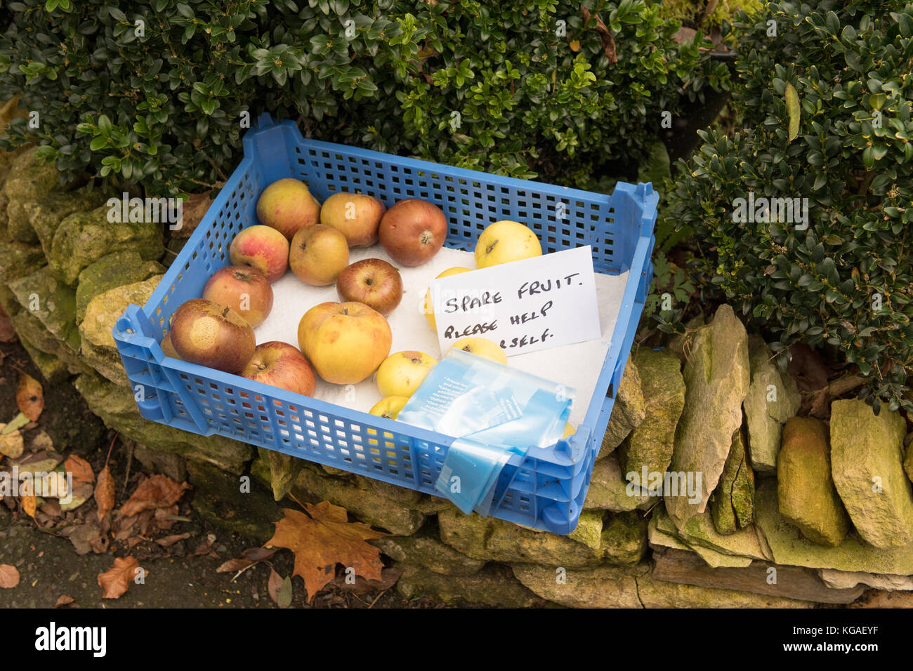 surplus apples in garden given away in Bourton on the Water, Gloucestershire, England, UK - Stock Image