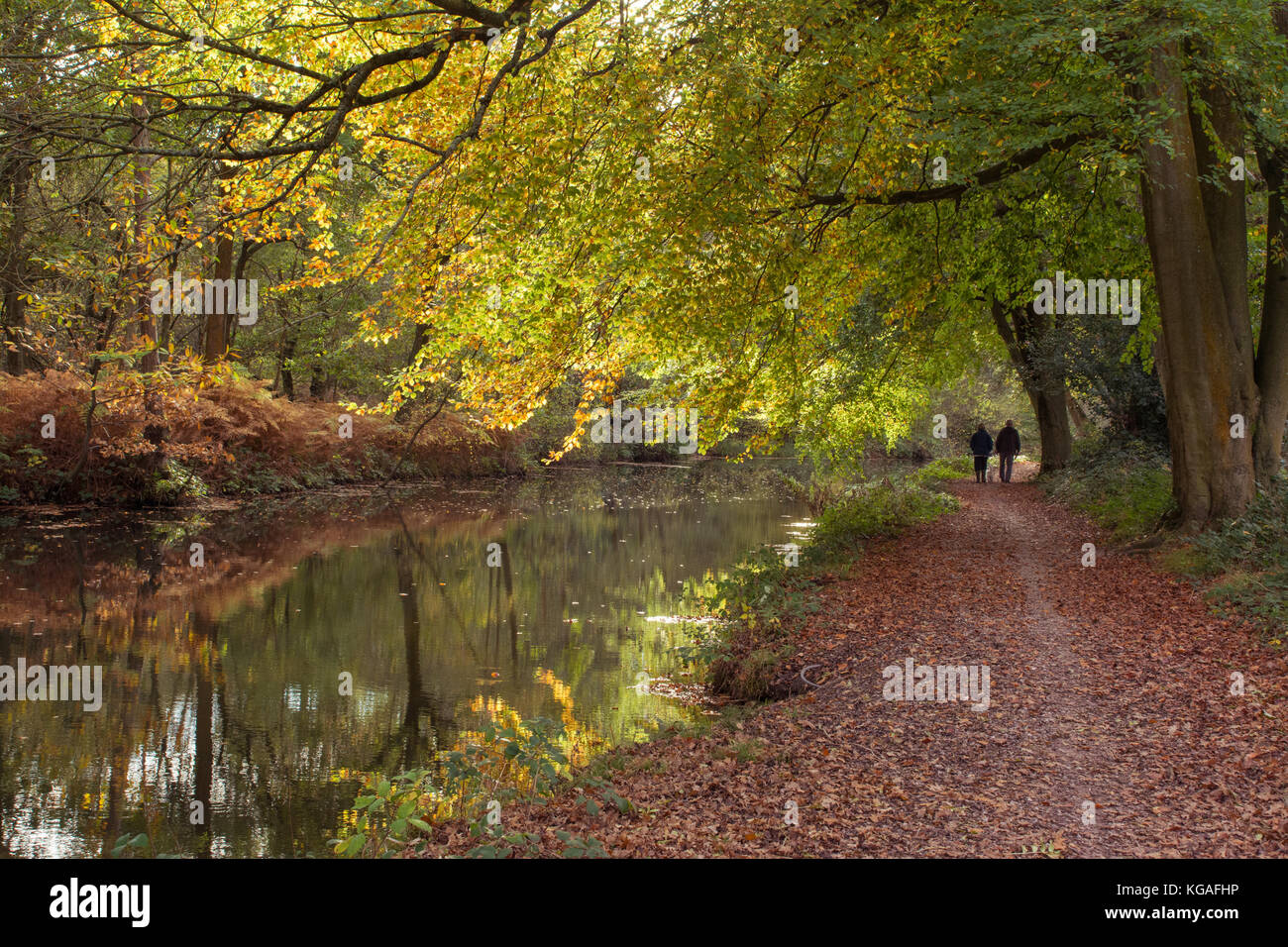 View of the Basingstoke Canal and towpath near Aldershot in Hampshire with autumn colours - Stock Image