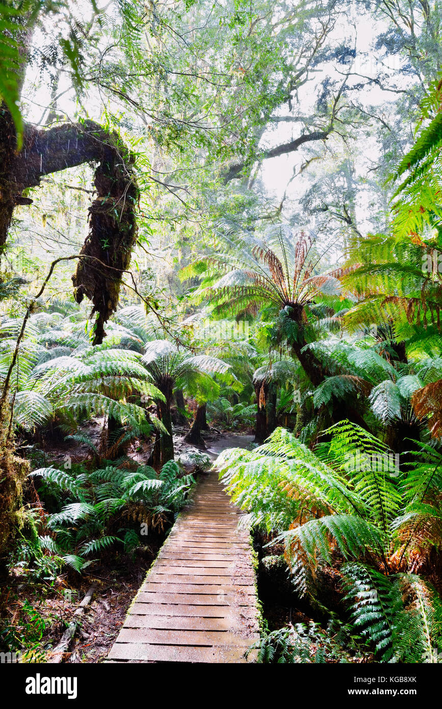 Australia, Victoria: Path in the Great Otway National Park on a rainy morning. A destination along the great oceanStock Photo