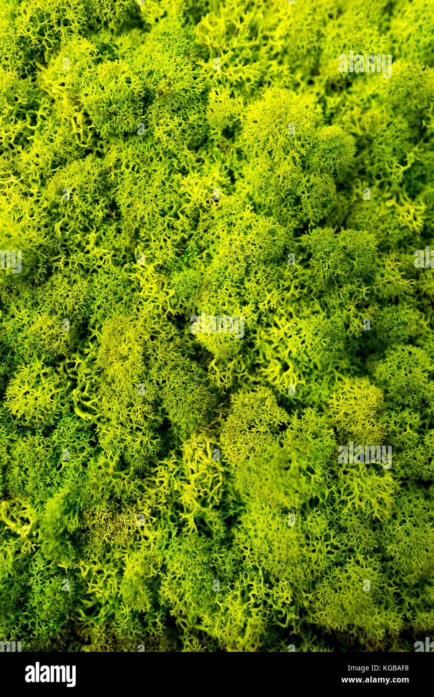 Moss Wall Interior Design Stock Photos Amp Moss Wall