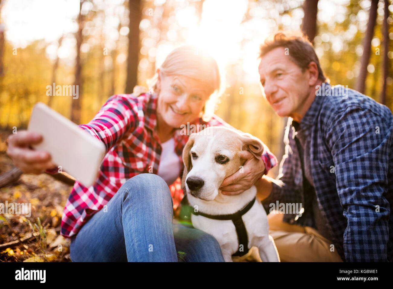 Senior couple with dog on a walk in an autumn forest. Stock Photo