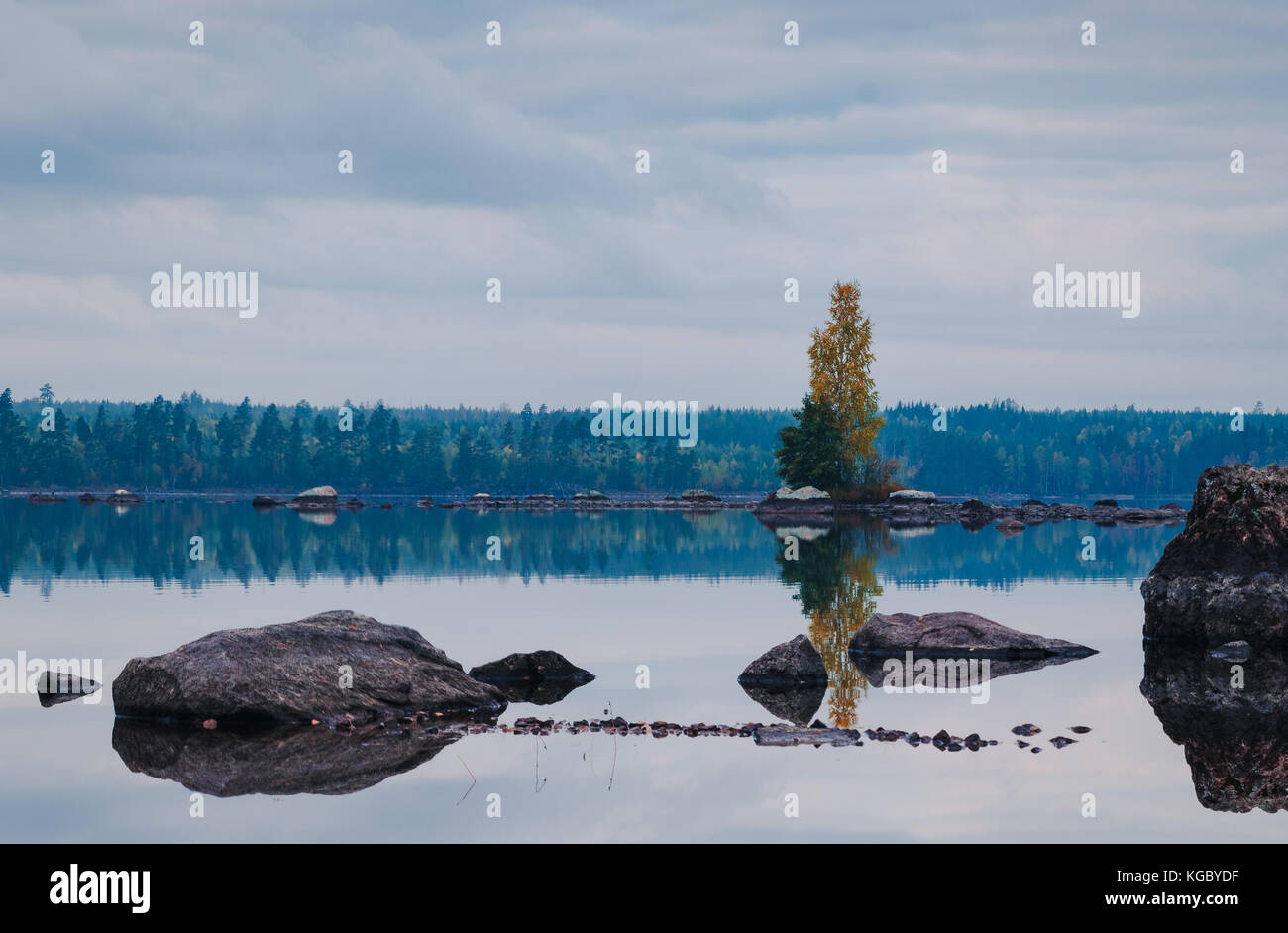 Lonely tree in a lake in the middle of nowhere in Sweden - Stock Image