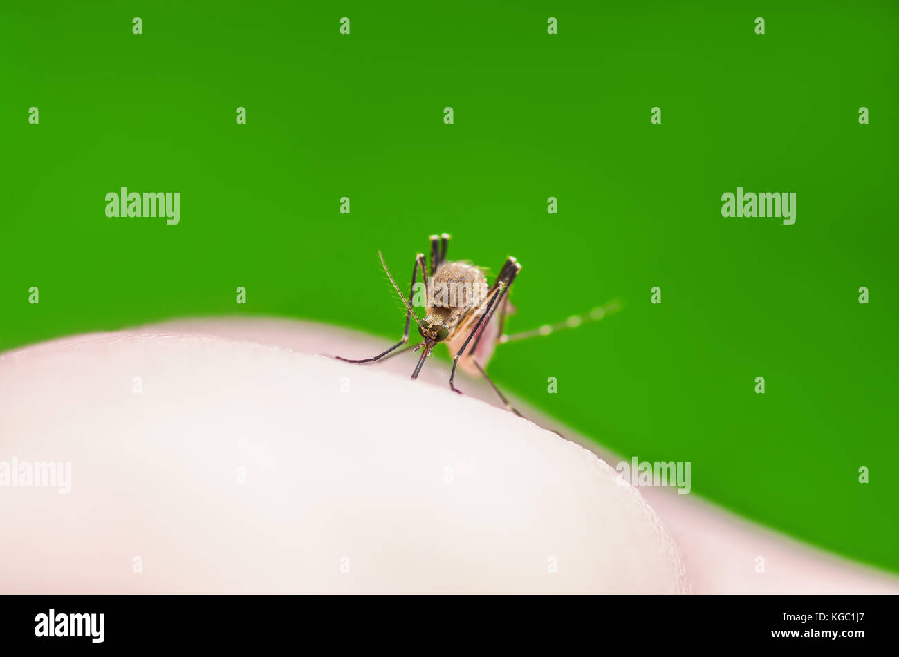 Insect Bite Stock Photos Amp Insect Bite Stock Images Alamy