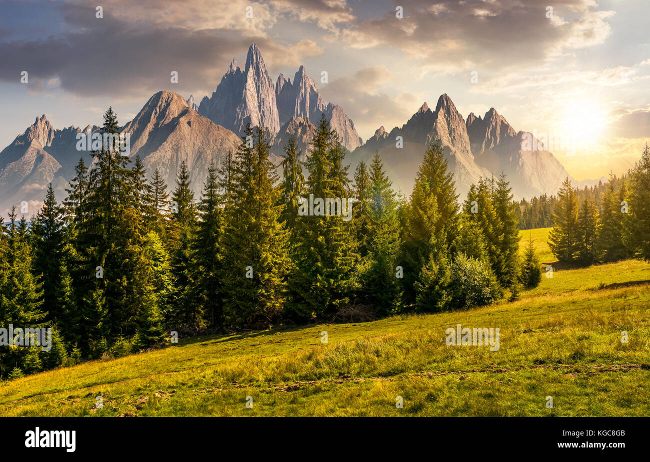 spruce forest on grassy hillside in mountains with rocky peaks at sunset. gorgeous composite image of summer landscape. - Stock Image