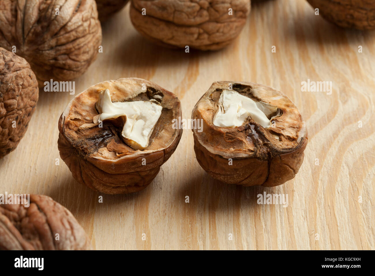 Two half fresh picked wet walnuts Stock Photo