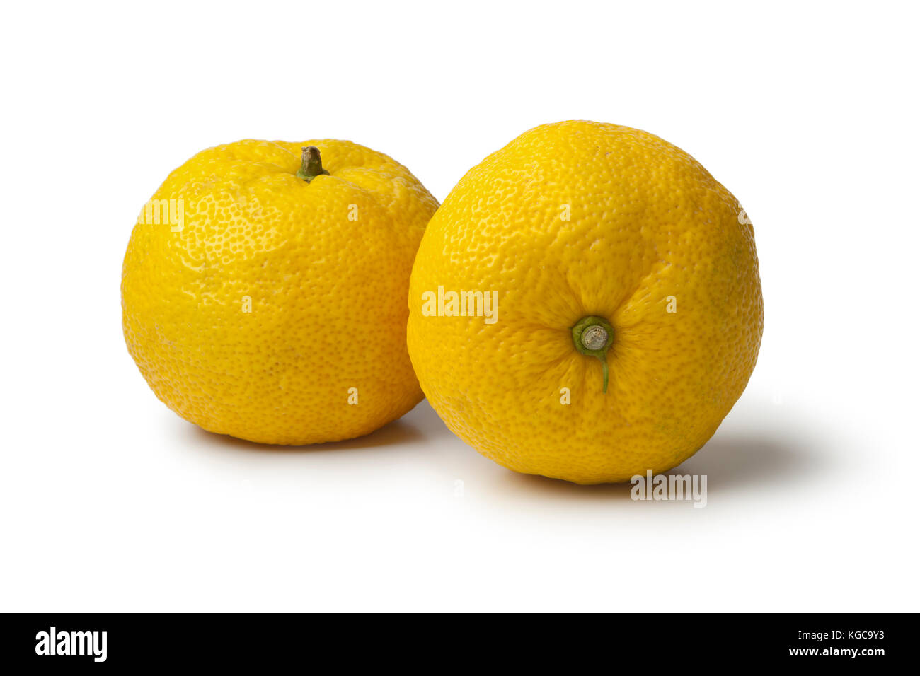 Pair of fresh yellow Japanese Yuzu on white background - Stock Image