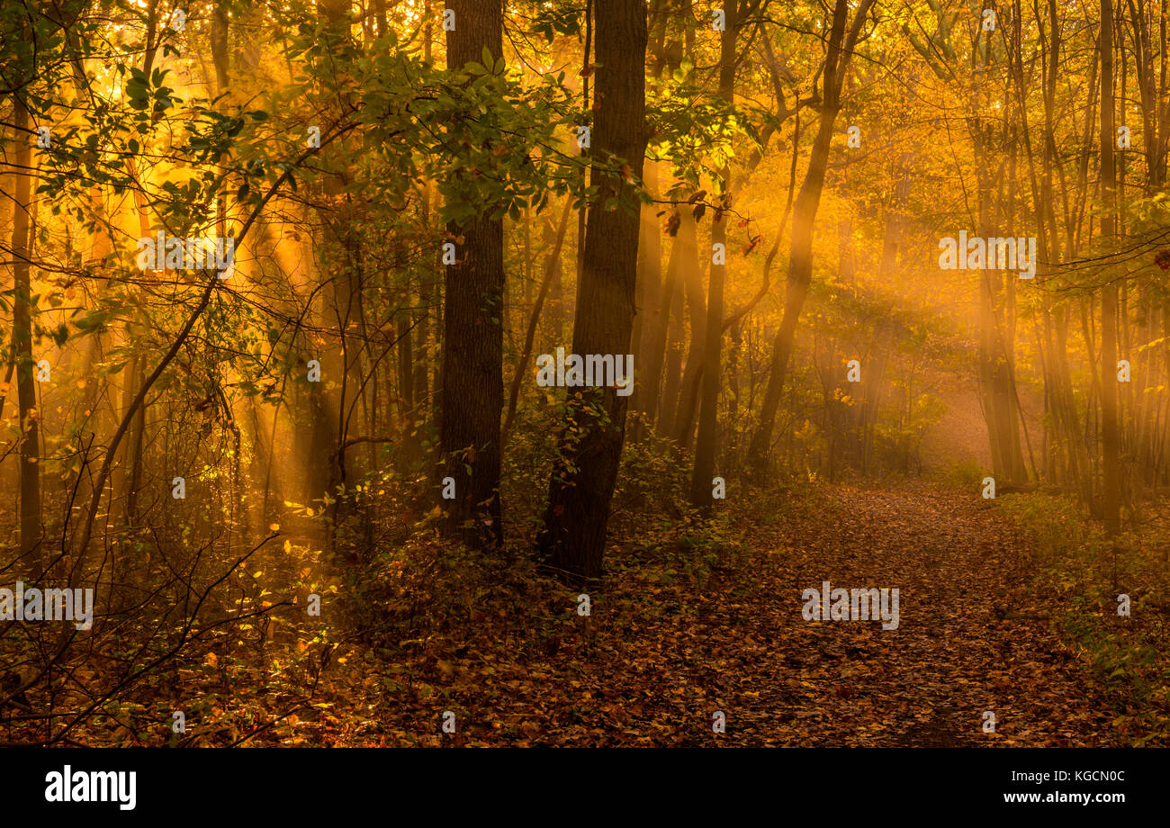 Lovely autumn morning scenery with sunbeams and fog Stock Photo