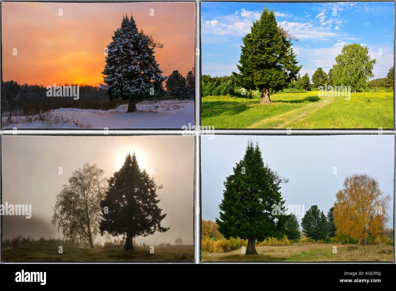 Four seasons spring, summer, autumn, winter trees collage with border - Stock Image
