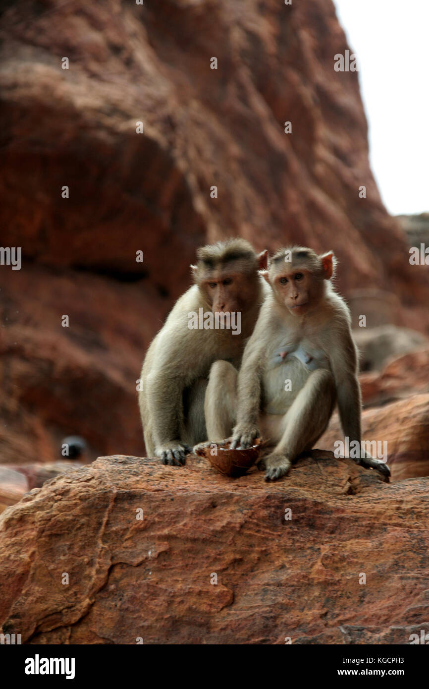 Two monkeys sitting prettily in diverse moods on a red rock - Stock Image