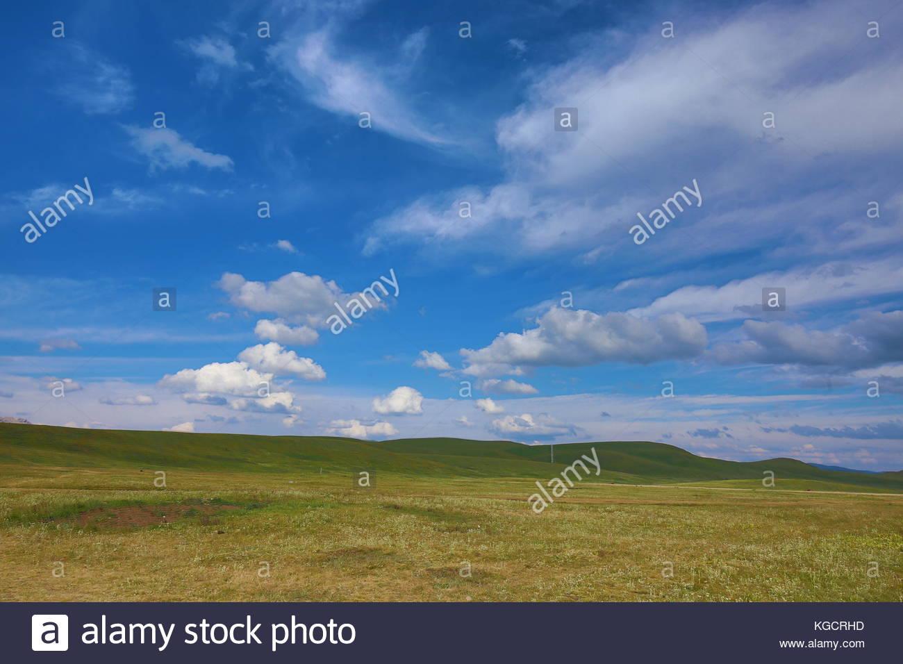 Grassland scene - Stock Image