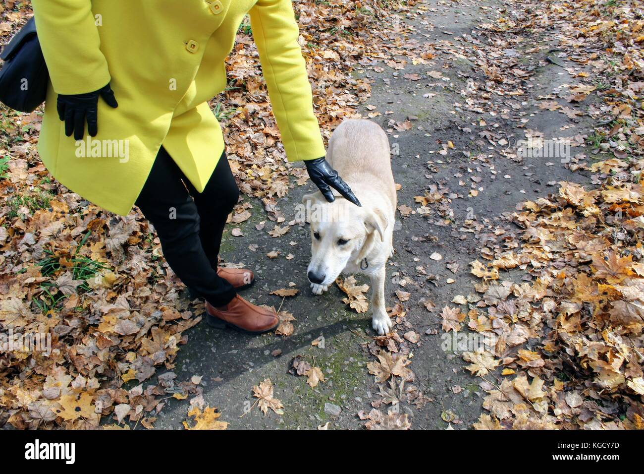 A woman stroking a dog in the estate of Count Leo Tolstoy in Yasnaya Polyana. - Stock Image
