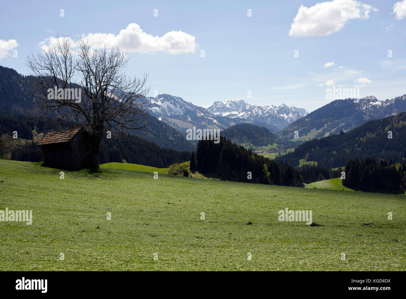 Freshly mowed grass and view of Allgäu Alps in the mountain exclave quadripoint border area of Jungholz, Tirol, - Stock Image