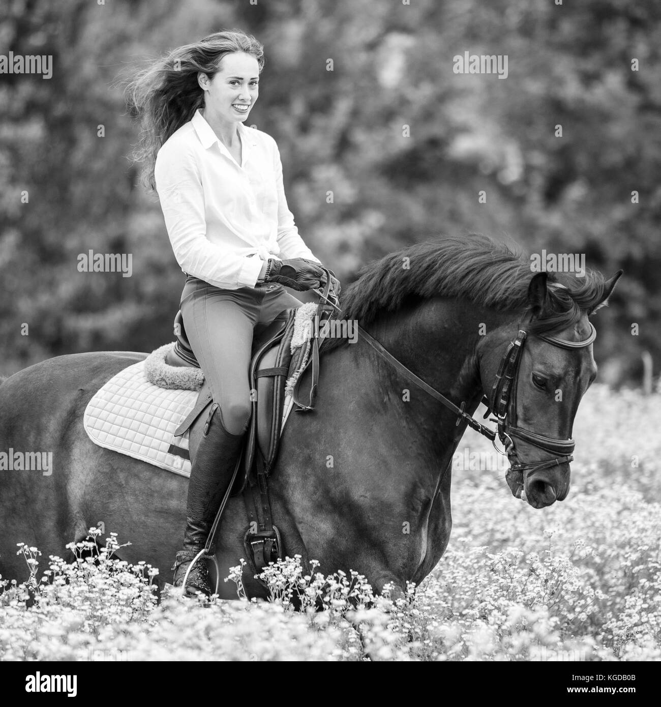 Young rider girl with long hair riding bay horse on chamomile field - Stock Image