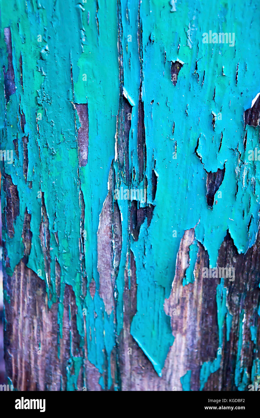 antique flaking green paint on exposed weathered grainy wood - Stock Image