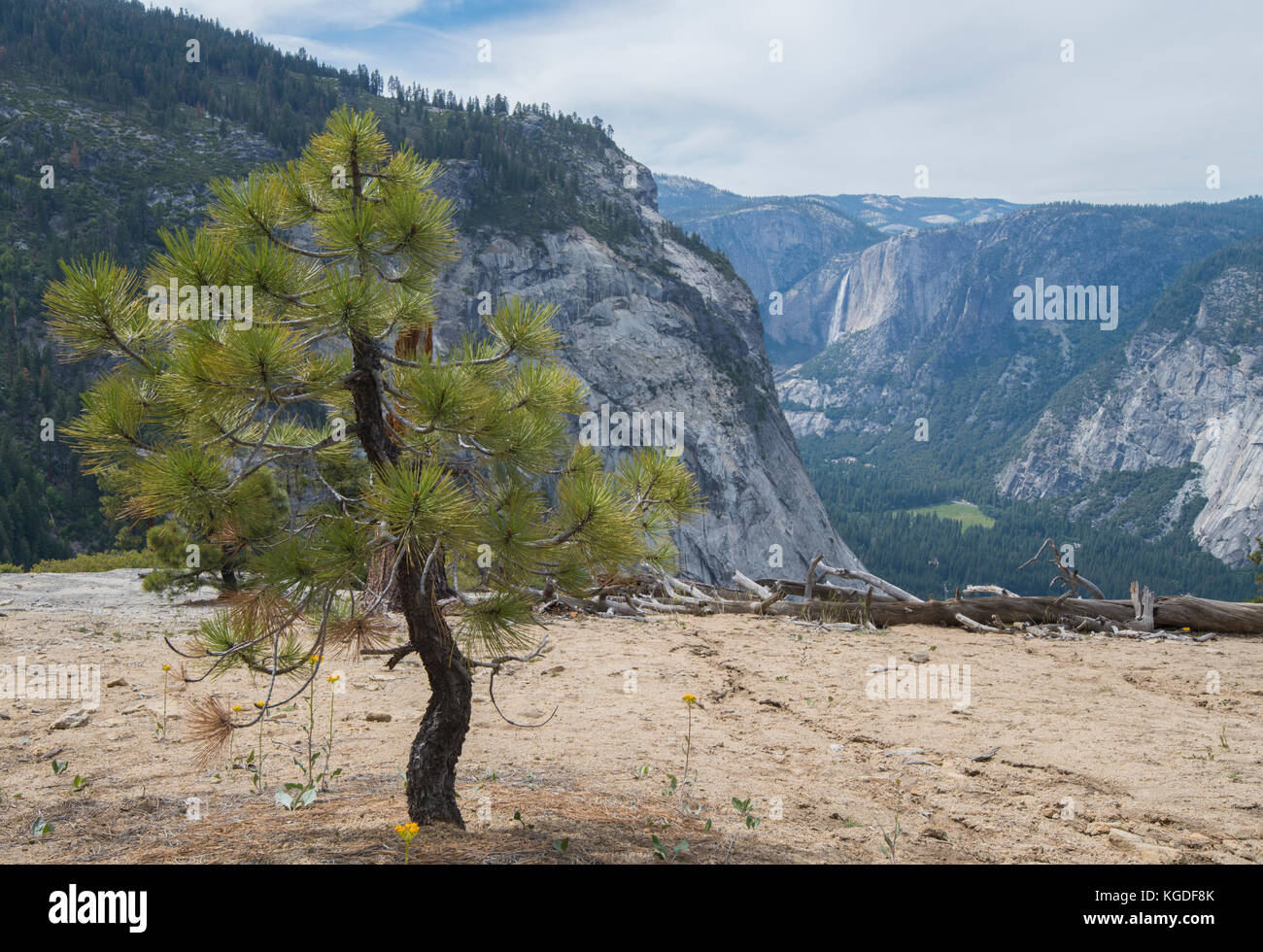 A tree overlooks Yosemite Valley from the John Muir Trail. - Stock Image