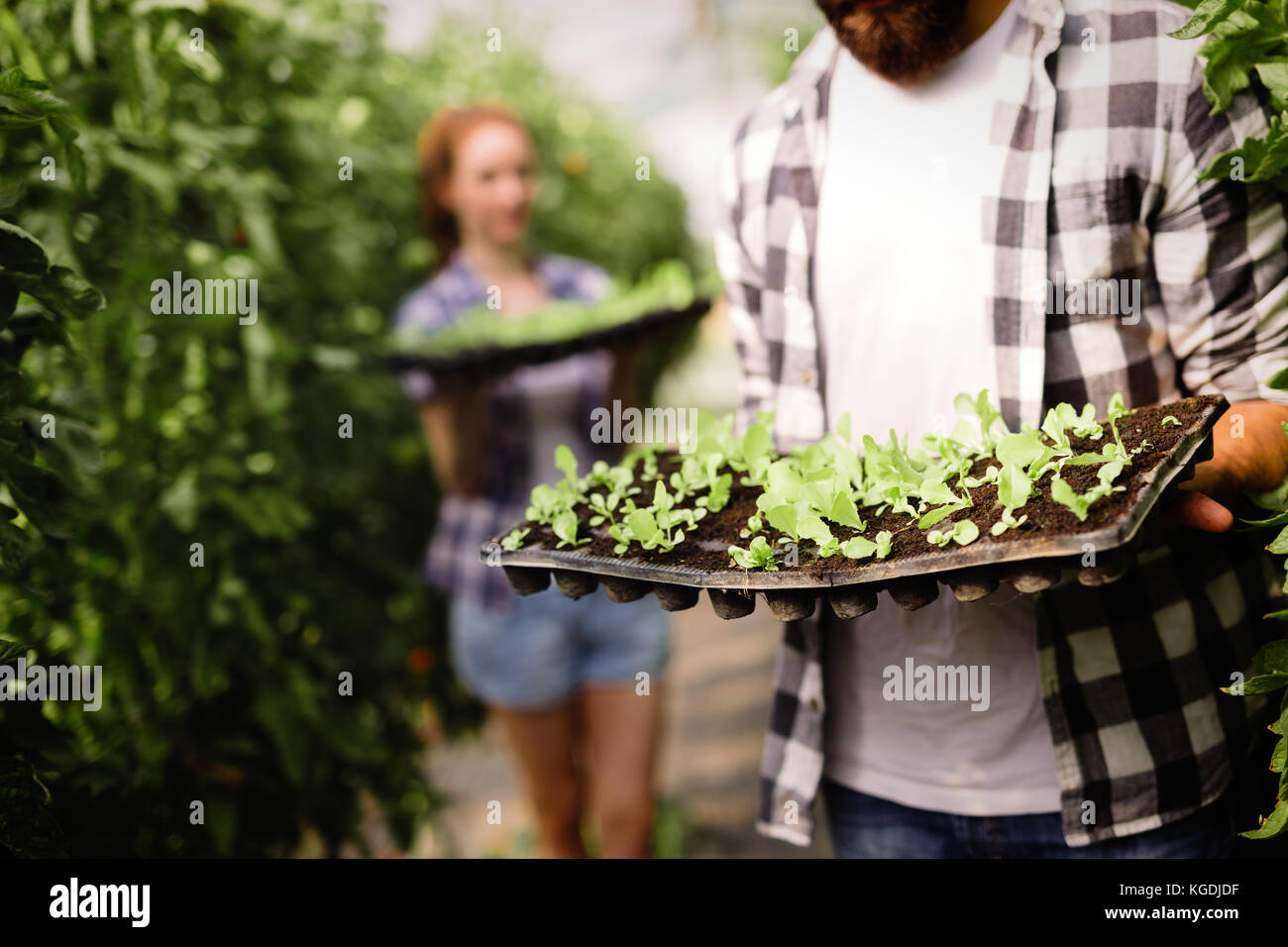 Image of couple of farmers seedling sprouts in garden - Stock Image