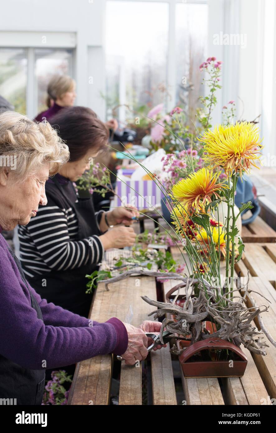 Ikebana artists arranging flowers at Como Conservatory in St. Paul, Minnesota, USA. - Stock Image