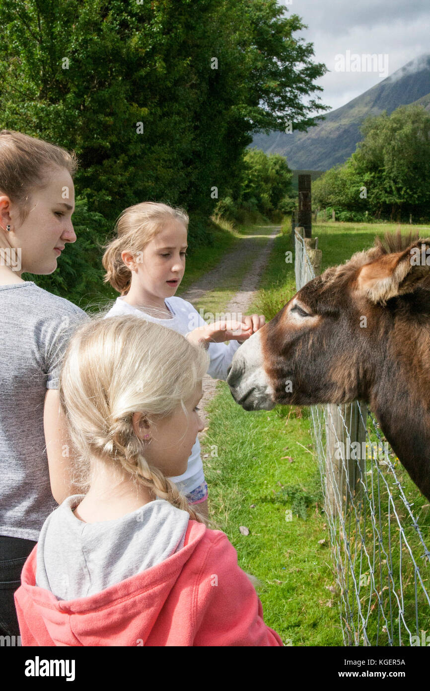 Children kids feeding, petting stroking a donkey in a green field, mountains in the background, Kerry Ireland showing - Stock Image
