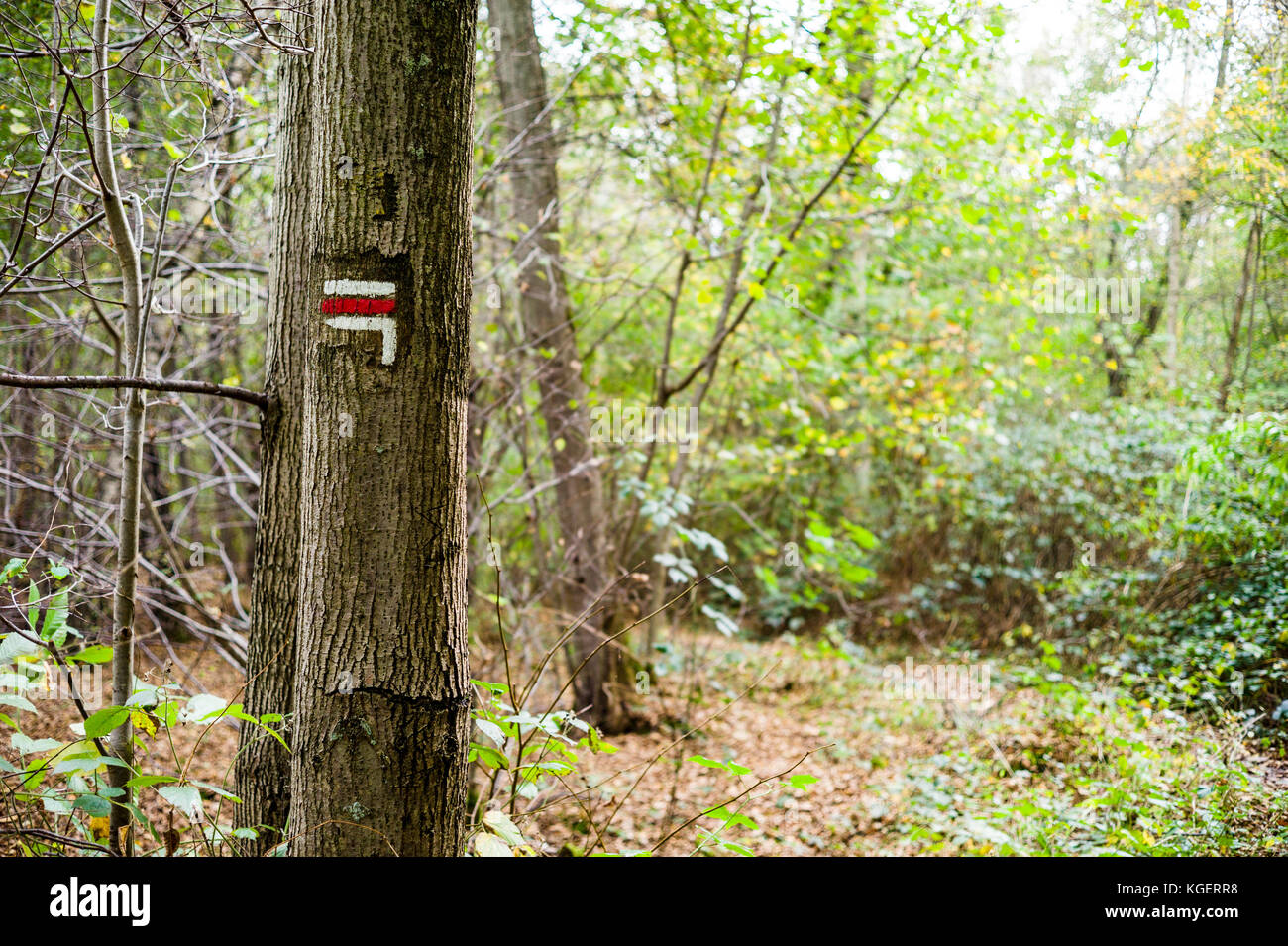 Red and white direction sign painted on a tree trunk on a long distance hiking trail in a french forest. - Stock Image