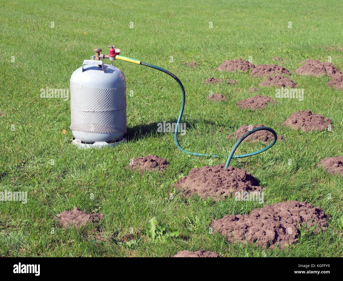Filling mole hills with toxic gas from gas cylinder to kill them. - Stock Image