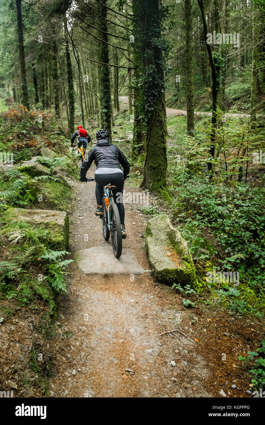 Mountain bikers riding along a track in Cardinham Woods in Cornwall. - Stock Image