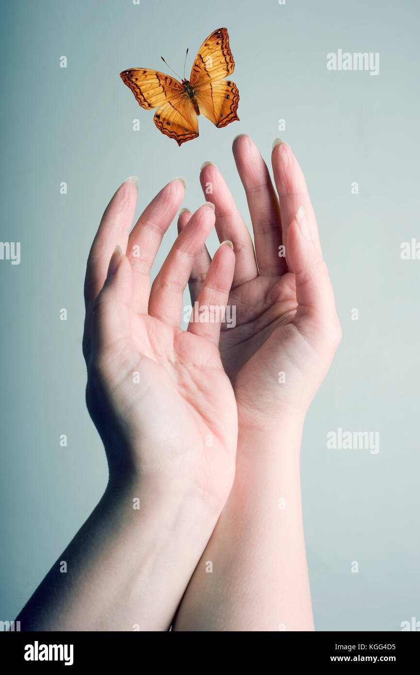 1801a0b98 female hands letting a butterfly fly away Stock Photo: 165082545 - Alamy