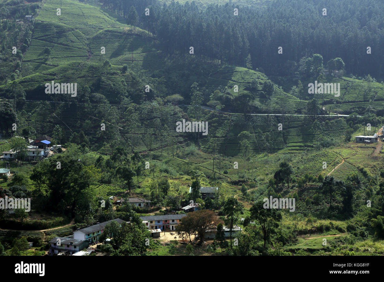 Tea Plantation near Nuwara Eliya Hill Country Central Province Sri Lanka Stock Photo