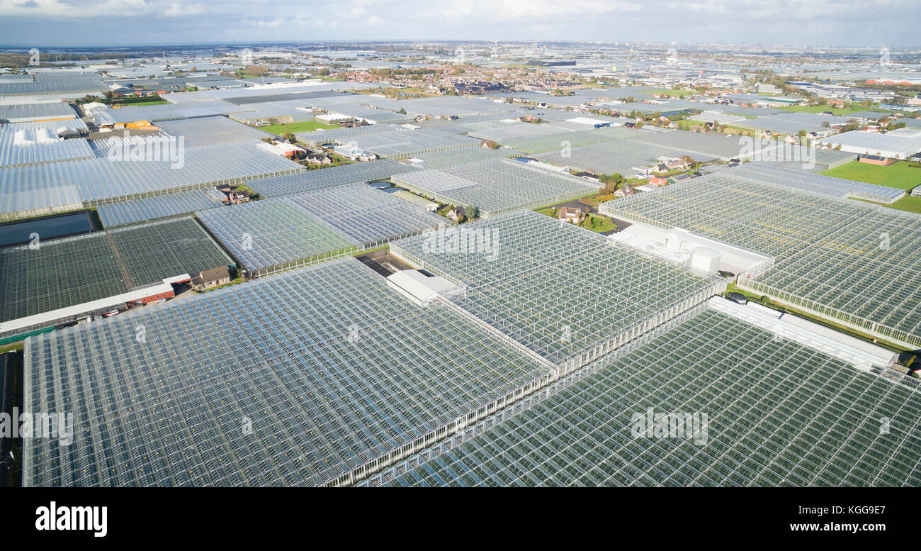 Aerial of greenhouses / glasshouses in the Westland area in The Netherlands Stock Photo