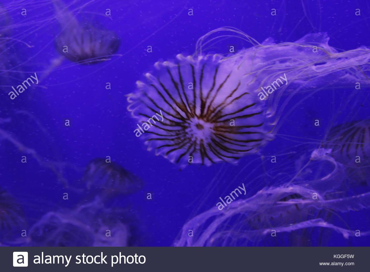 Marine organism - Stock Image
