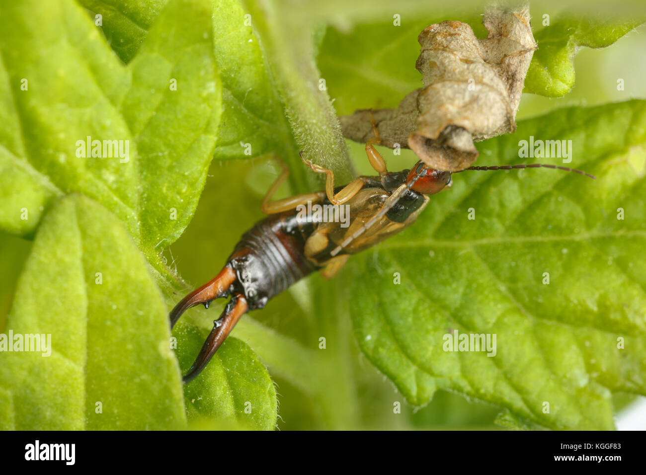 Pests Eating Plant Stock Photos & Pests Eating Plant Stock Images