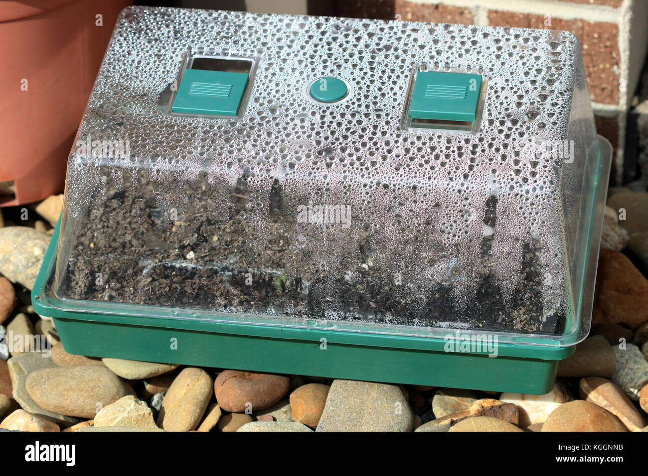 Build-up of condensation  in Mini Green House With Seed Tray - Stock Image