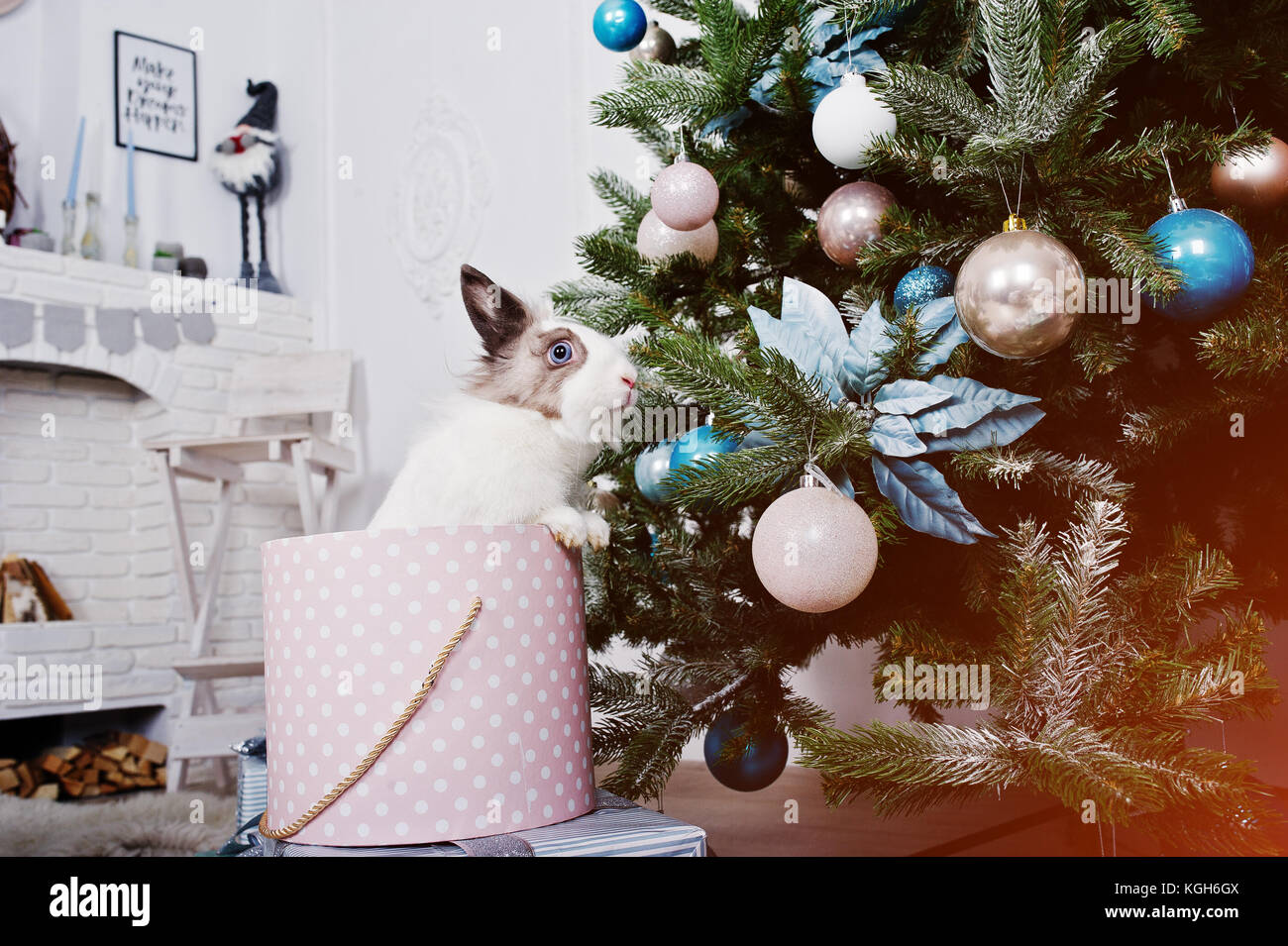 Funny Bunny Rabbit At Gifts Box Under New Year Tree Happy Winter