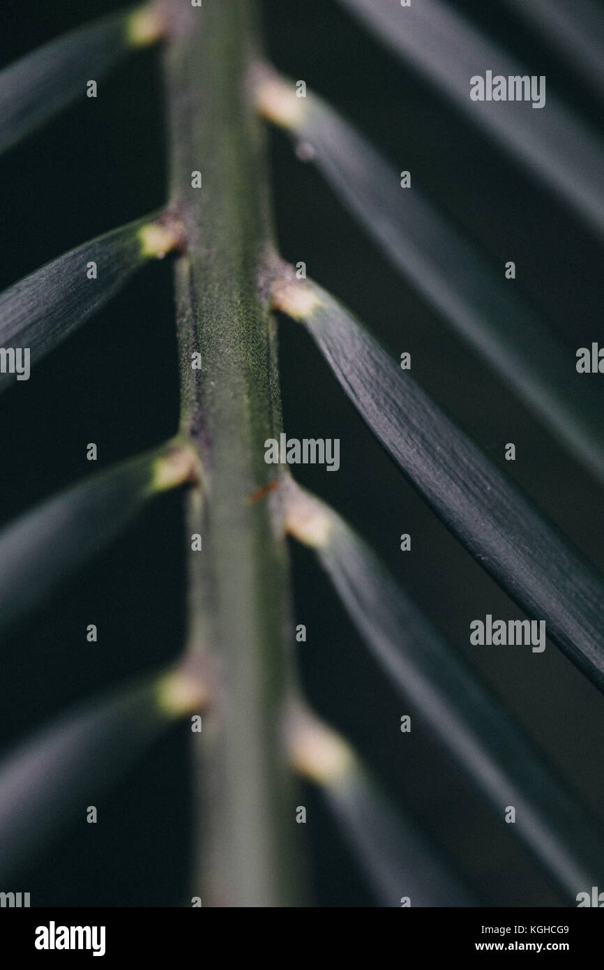 Close up of palm leafs at Nymphenburg Botanical Garden, Munich, Bavaria, Germany. - Stock Image