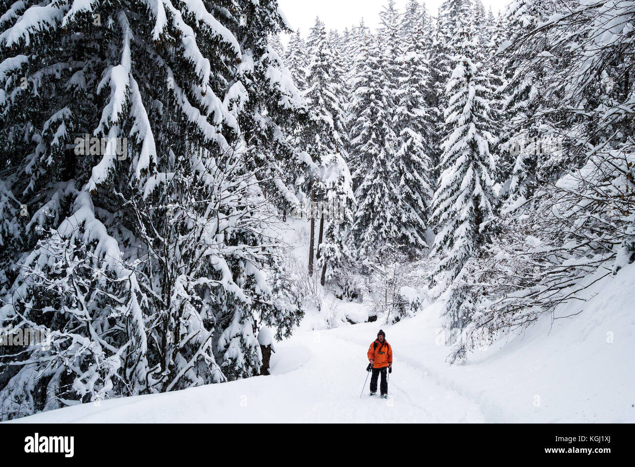 Walker trekking through snow forest. Les Arcs, Savoie. France - Stock Image