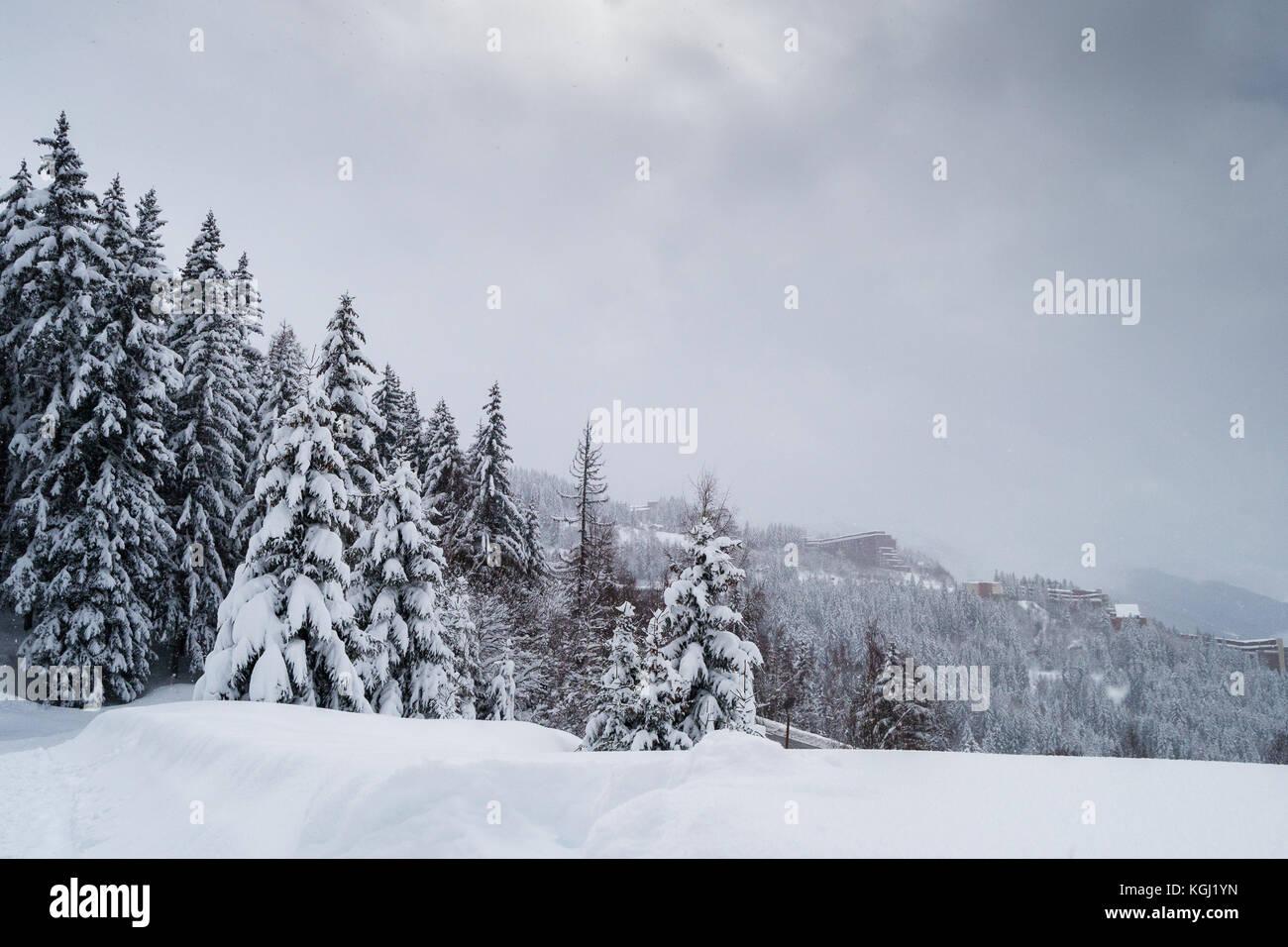 Winter Scene with Pine trees. Les Arcs, Savoie. France - Stock Image