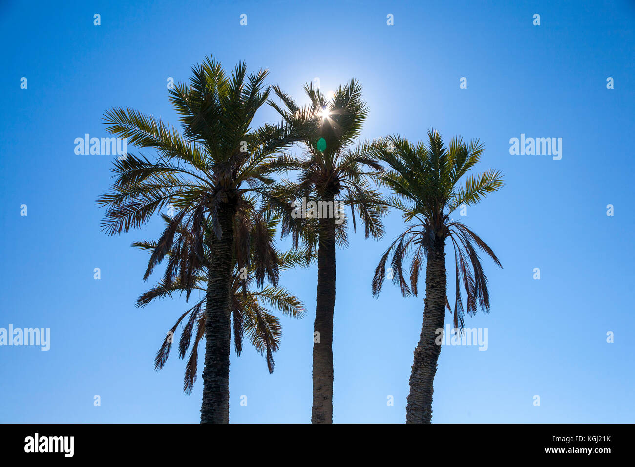 Palm trees against a blue sky with sun - Stock Image