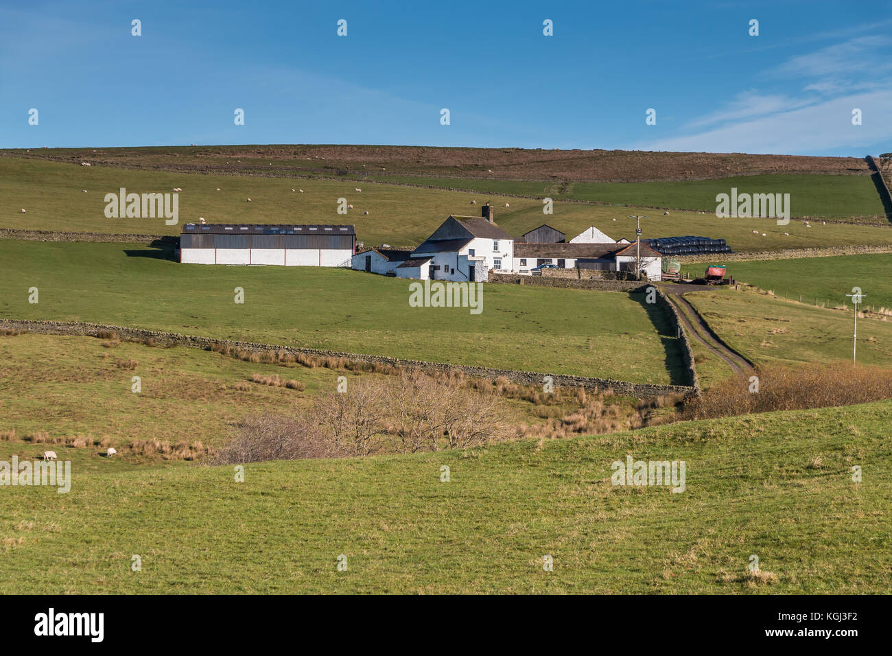 North Pennines Landscape, Ashdub Farm, Ettersgill, Upper Teesdale in strong autumn sunshine under a clear blue sky - Stock Image