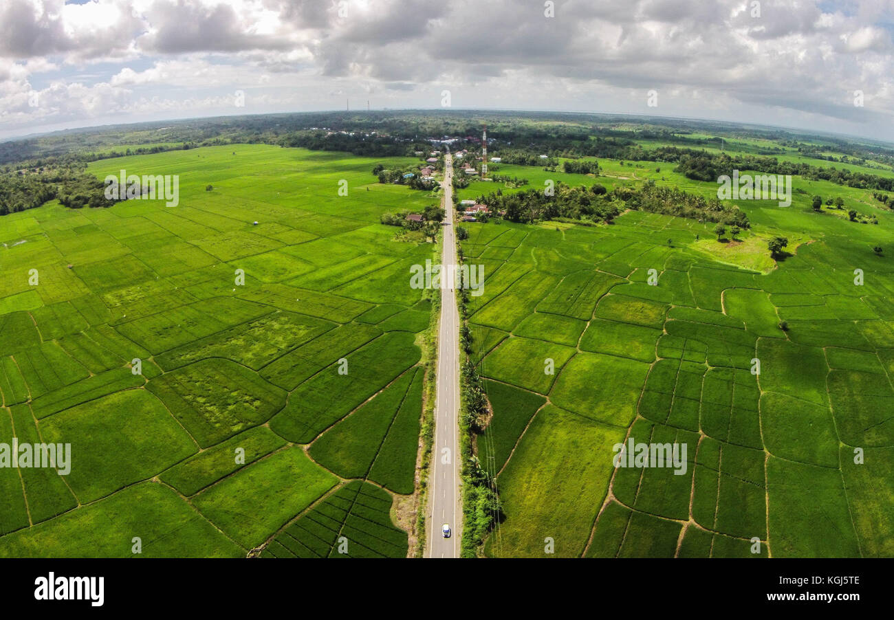 Road and Rice Field in Sidrap - South Sulawesi - Indonesia - Stock Image