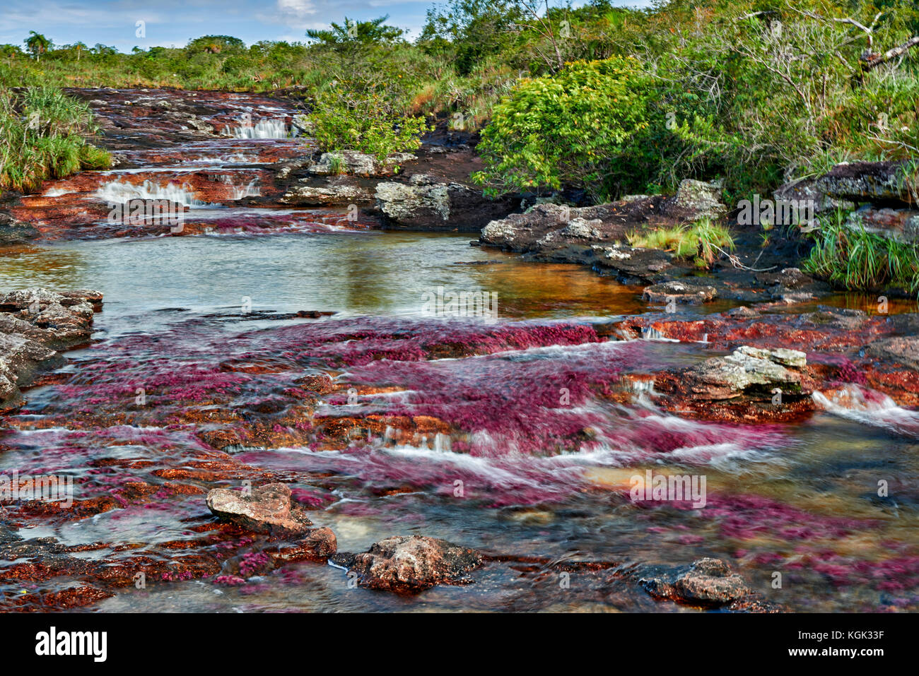 Cano Cristalitos near Cano Cristales called the 'River of Five Colors' or the 'Liquid Rainbow', - Stock Image
