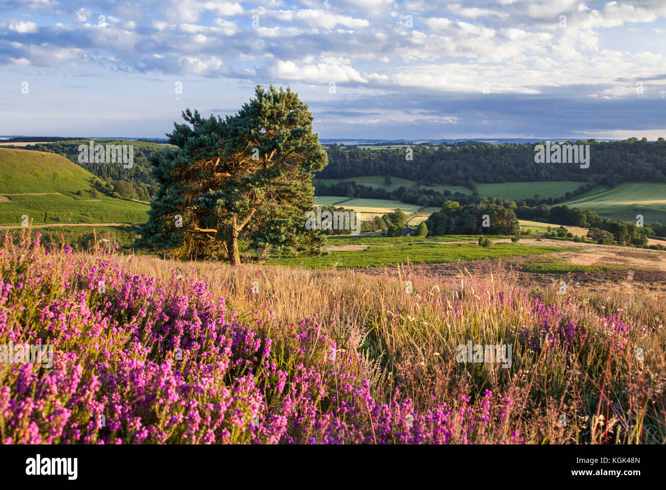 Lowna from Hutton Knowl North York Moors national park North Yorkshire - Stock Image