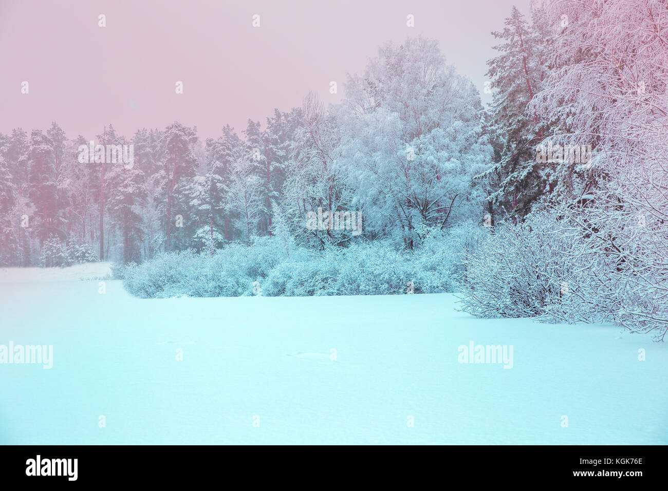 Sunlight in the winter forest. Panoramic view. Panorama winter fairy tale Stock Photo
