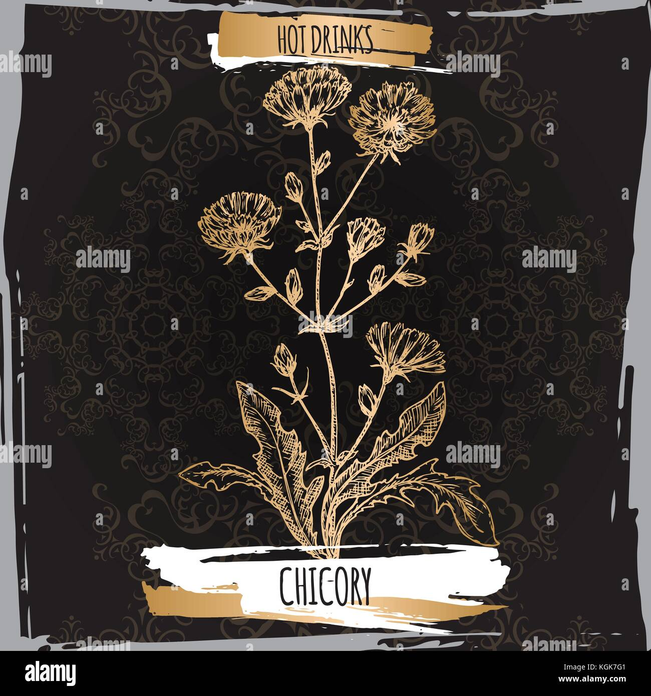 Cichorium intybus aka common chicory sketch on black background. Used as coffee substitute. - Stock Image