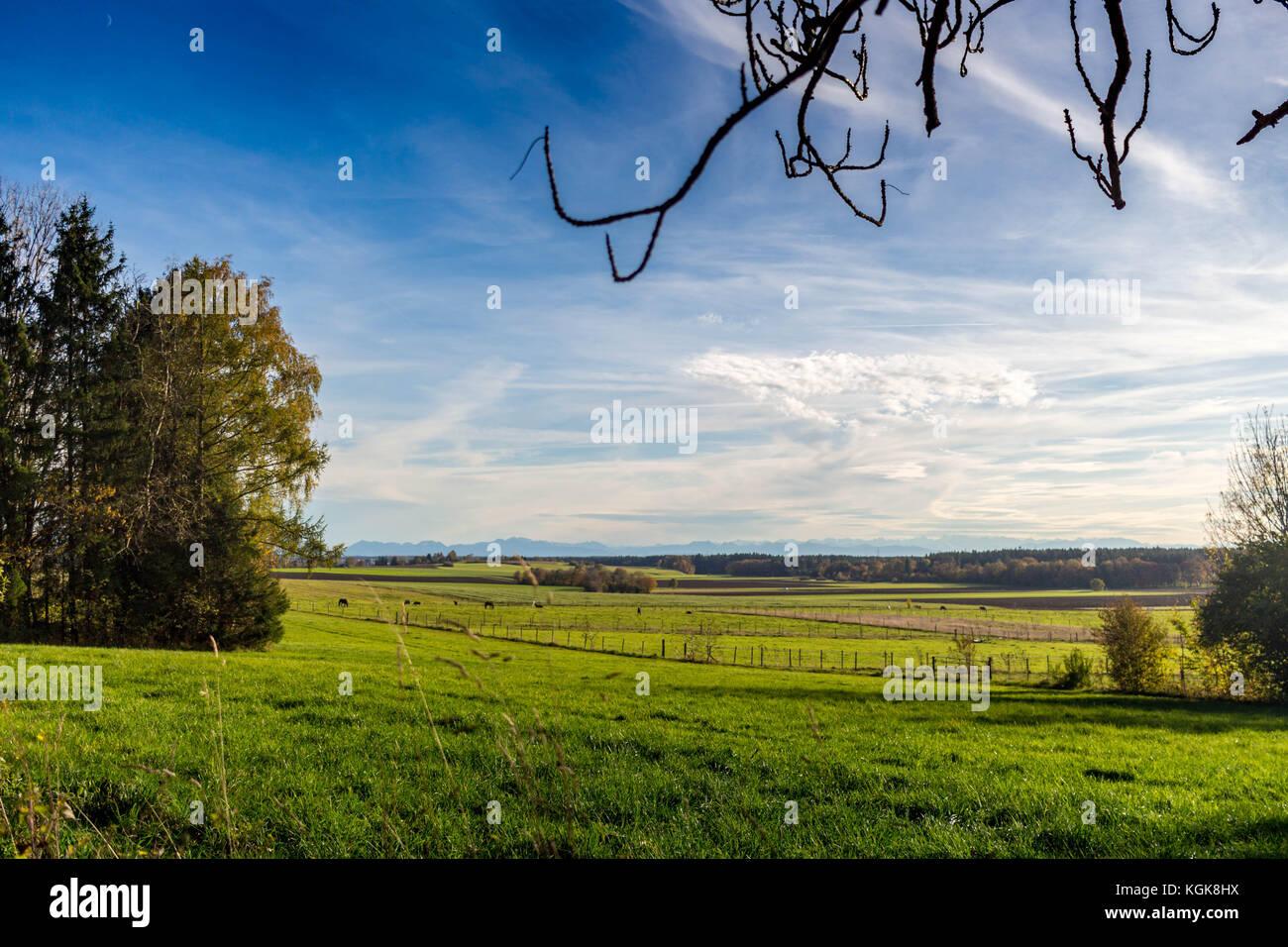 Feld- und Wegrand - Stock Image