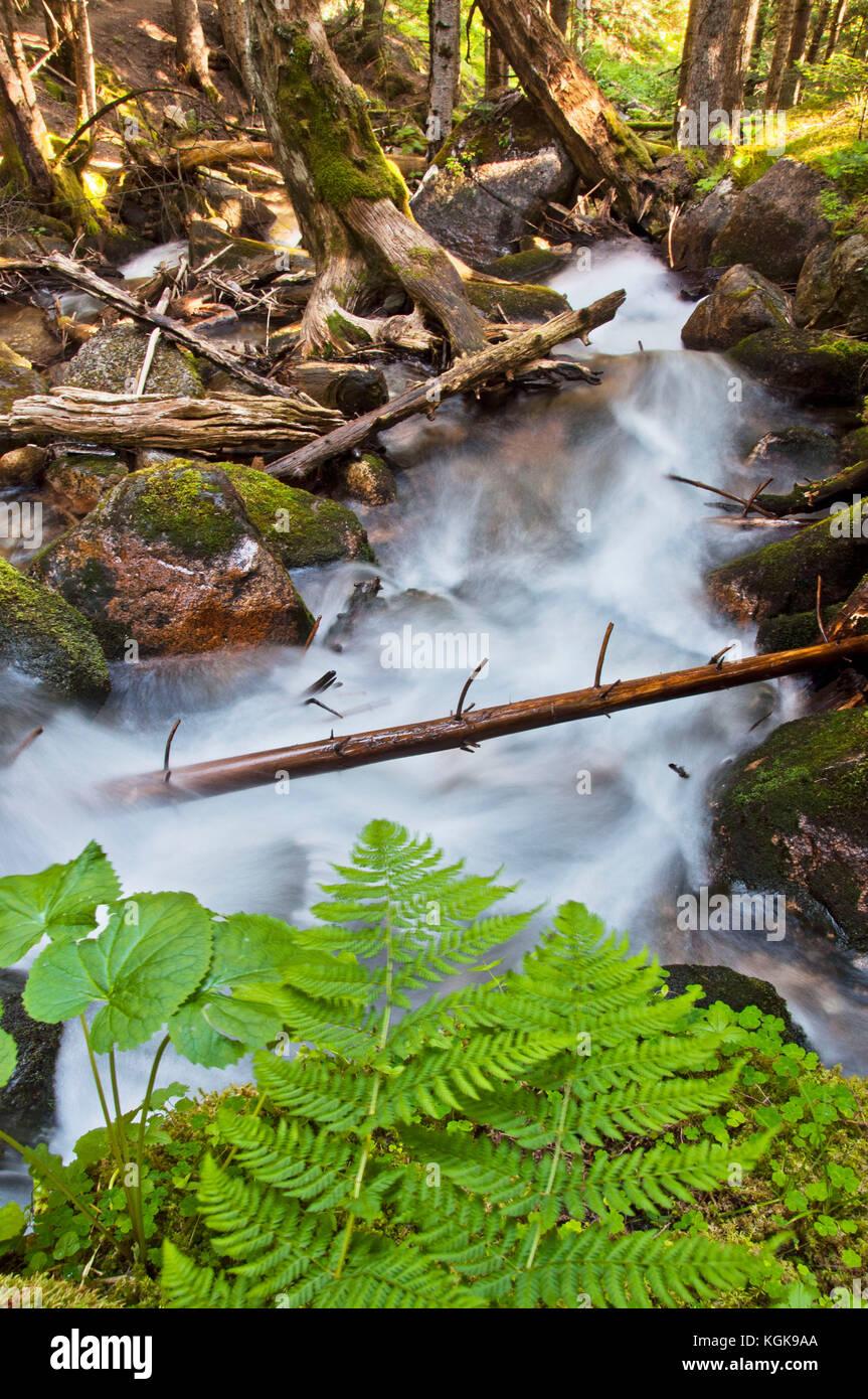 Kgk Gardening Landscape: White River National Forest Summer Stock Photos & White