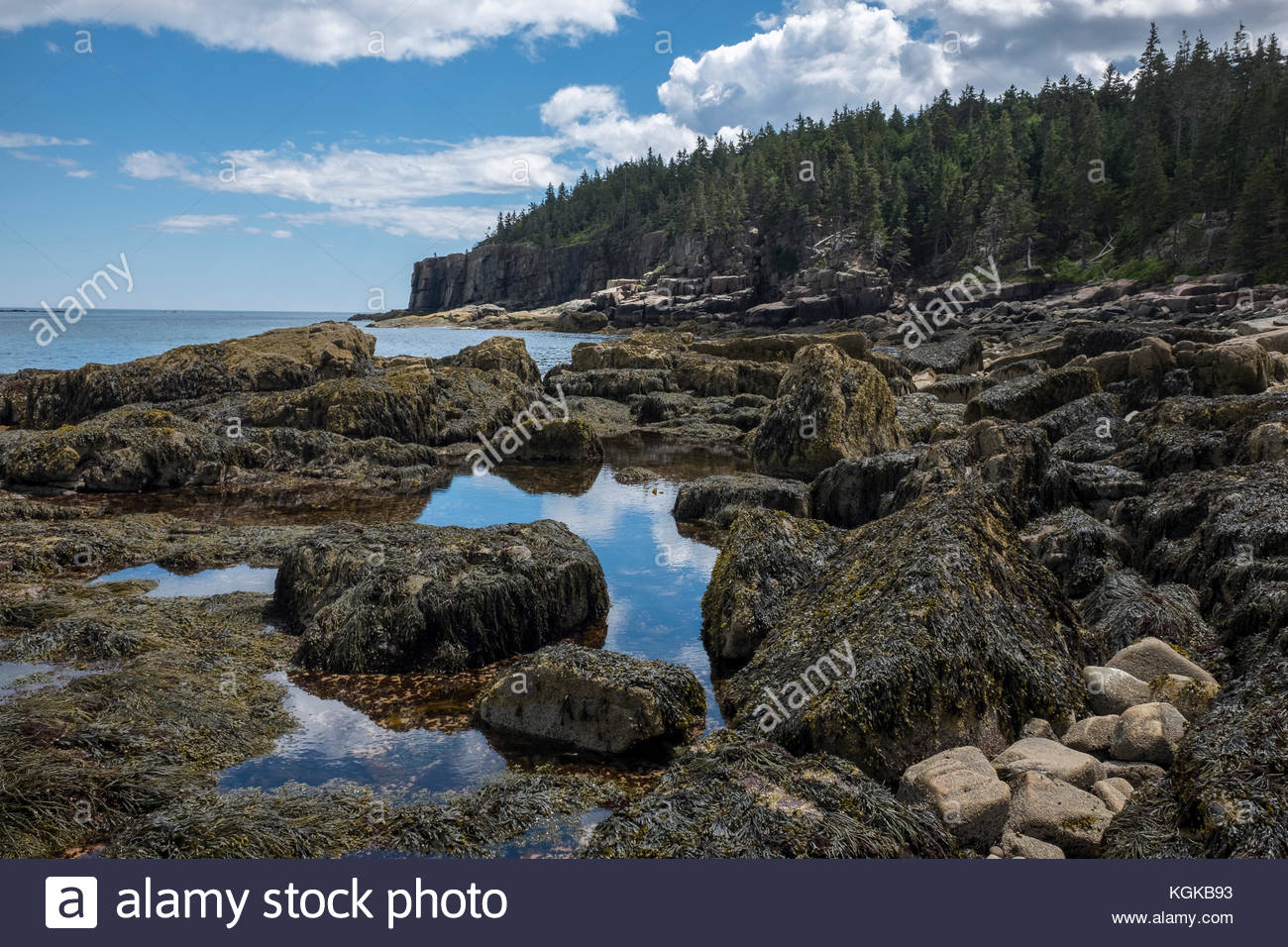 Low tide along the shoreline at Acadia National Park. - Stock Image