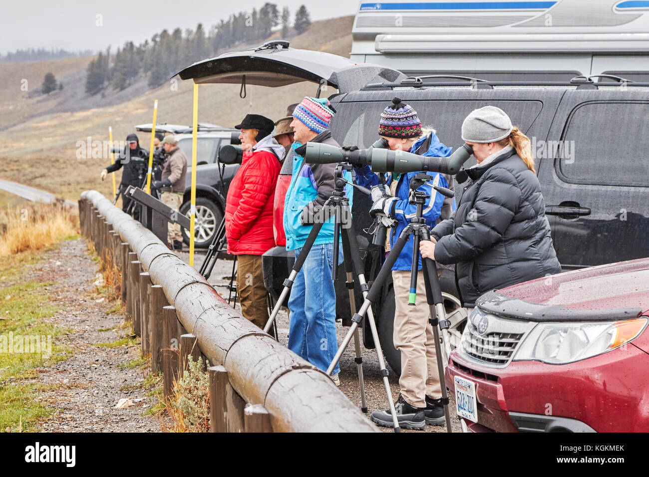 Yellowstone National Park, Wyoming, USA - October 29, 2016: Wildlife watchers observe wolfs in a cold rainy day. - Stock Image